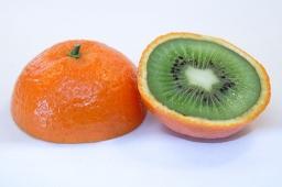 Genetiškai modifikuotų augalų pasėliai Lietuvoje neauginami