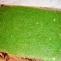 Žaliasis vyniotinis