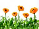 Talentingas žmogus: neįtikėtinai gražios gėlės iš daržovių